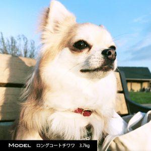 超小型犬のためのチョーカー迷子札