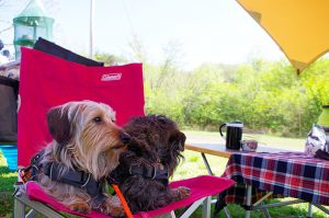 みちのく公園ドッグフェスティバル2019に出店します