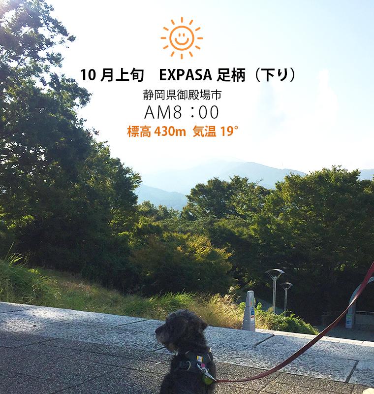 犬連れ旅行写真 東名高速道路EXPASA足柄サービスエリアでの写真