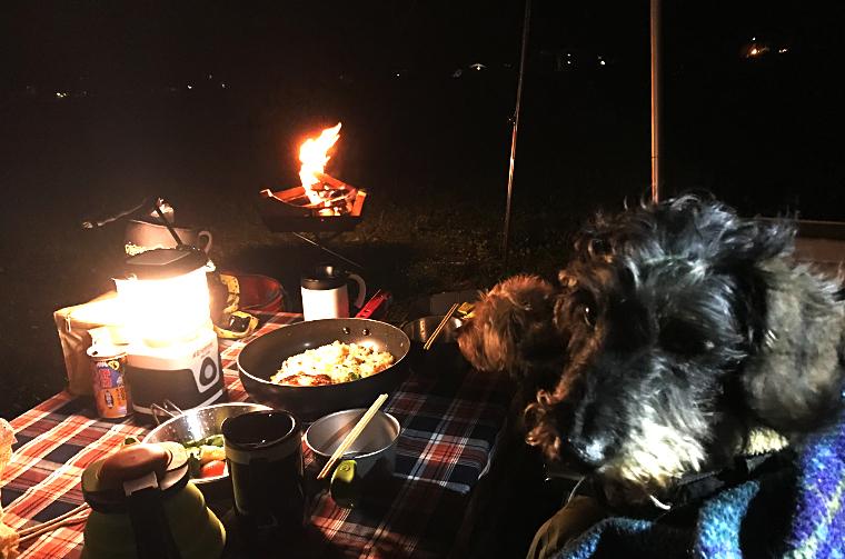 ふもとっぱらキャンプ場で愛犬と一緒に焼き芋をしながら焚き火を楽しむ