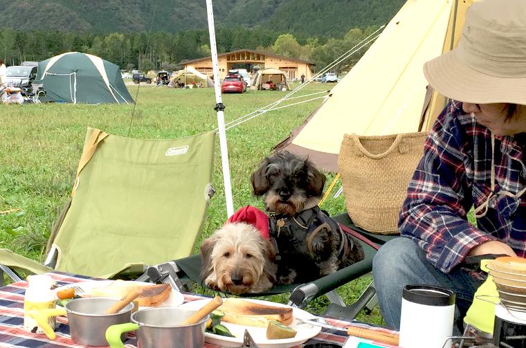 ふもとっぱらキャンプ場で草原モーニング。ワンコはまだ眠そう。