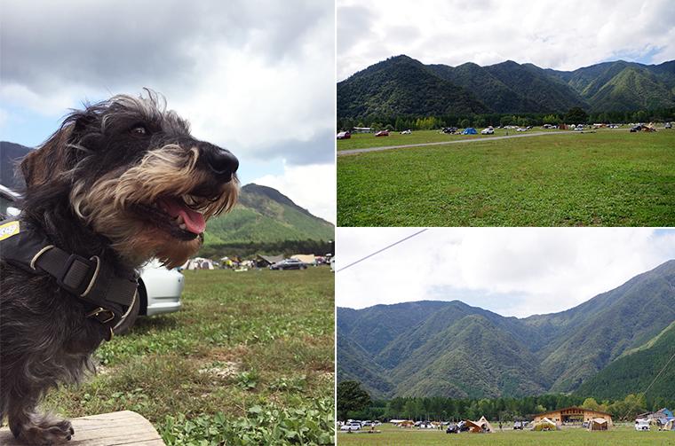 ふもとっぱらキャンプ場。開放的な空間に愛犬もご満悦!