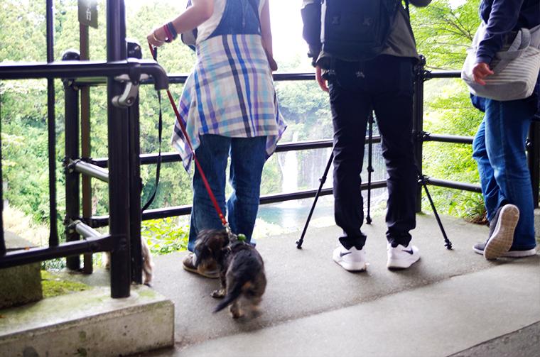 犬連れの旅。白糸の滝を遠望できる場所。
