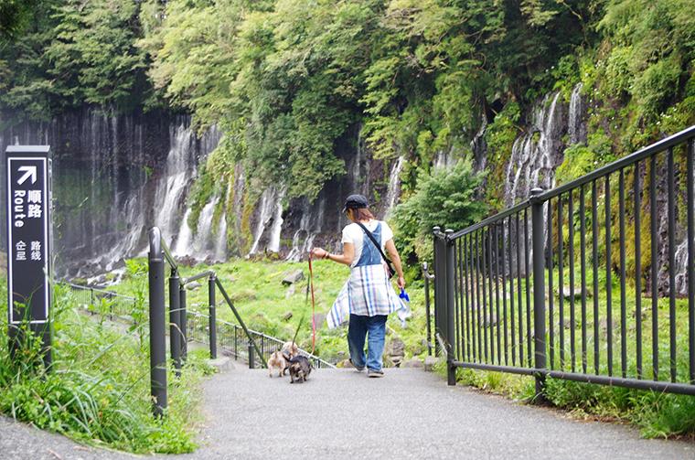 犬連れの旅。白糸の滝壺へ向かう順路。小さな階段が点在。